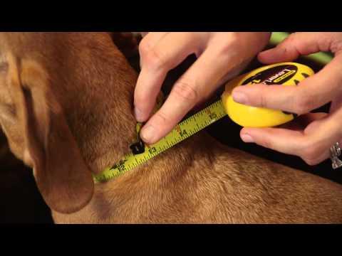 Nasıl Mükemmel Bir Uyum İçin Köpek Ölçmek İçin : Köpek & Evcil Hayvan Bakımı
