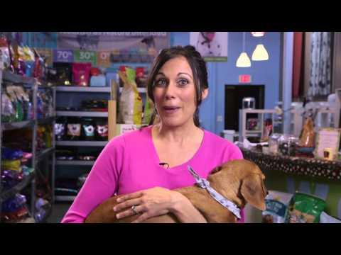Nasıl Pet Mikroçip Hizmetleri Çalışıyor Mu? : Köpek Ve Evcil Hayvan Bakımı