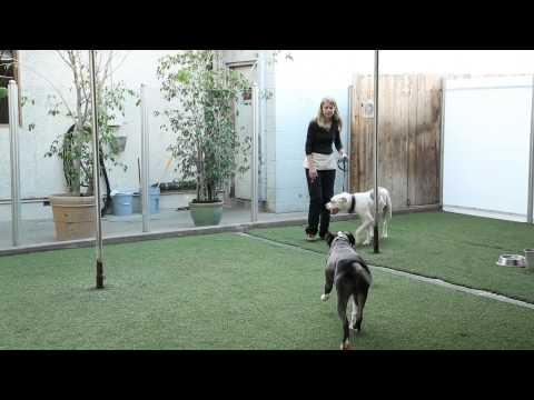 Off-Tasma Köpek İle Nasıl Başa & Sahipleri : Köpek Yetiştirme