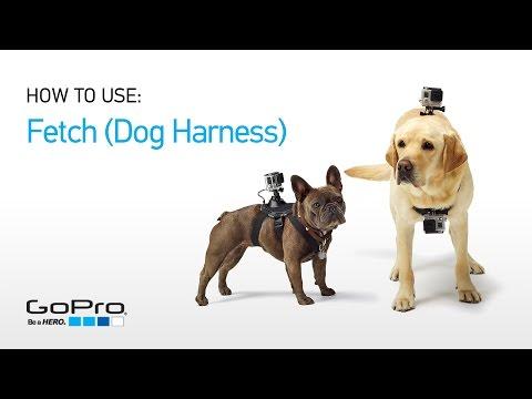 Gopro: Fetch (Köpek Koşum) Tanıtımı