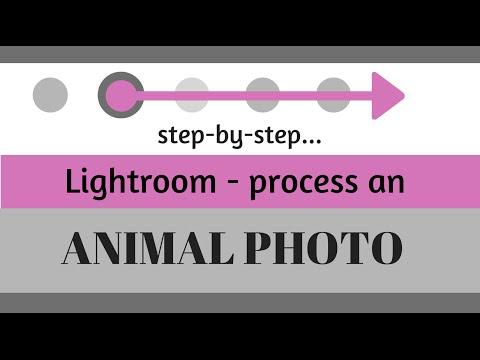 Düzenleme Ve Adobe Lightroom Hayvan Fotoğraf Geliştirmek