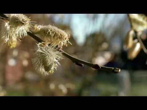 Bahar Geldi | 4K Güzeldir